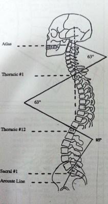 背骨のS字弯曲
