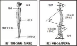 姿勢と脊柱の生理的弯曲