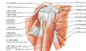 過多全面解剖図