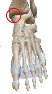 足関節解剖図