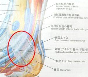 足根管解剖図