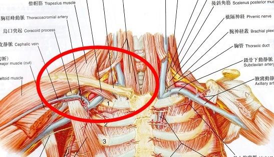 胸郭出口解剖図