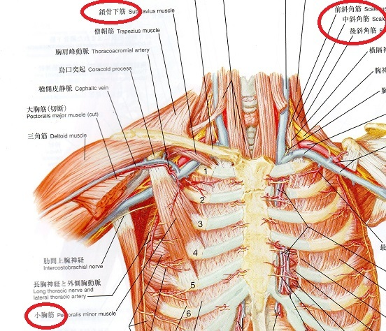 胸郭出口症候群 障害場所
