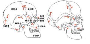 頭蓋骨動き