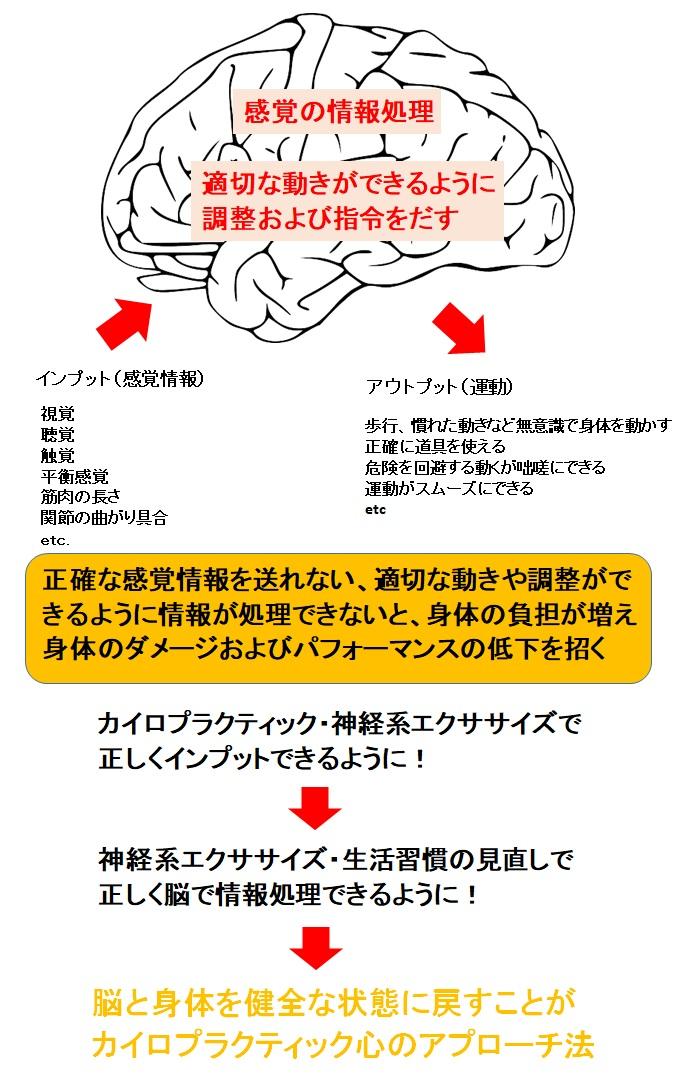 脳・カイロプラクティックアプローチ