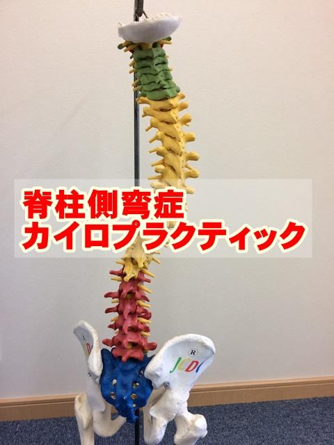 脊柱側弯症カイロプラクティック